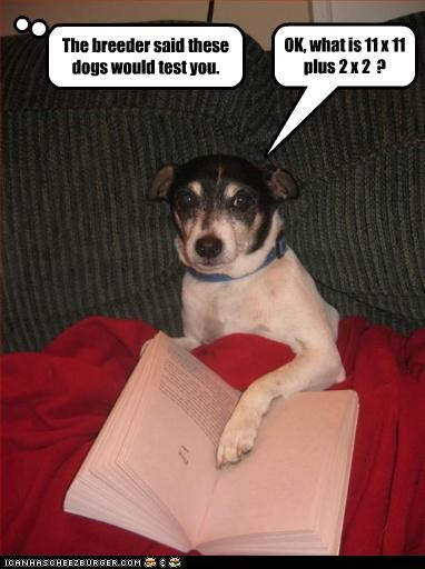 book math test toy fox terrier - 3373239040