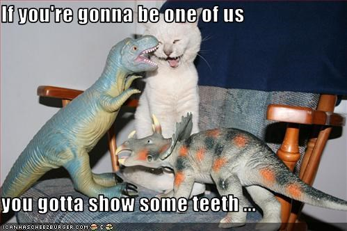 dinosaurs,kitten,look a like,teeth,toys