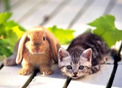 bunny friends kitten - 3375699968