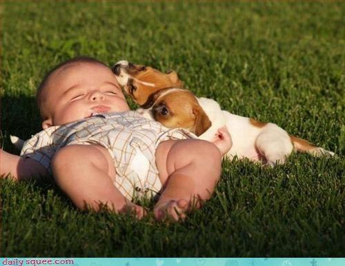 baby dingo puppy - 3375701504