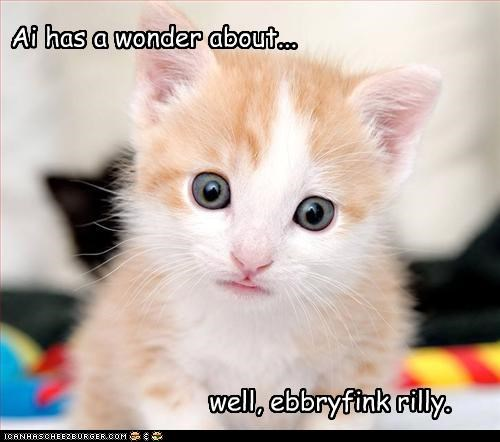 confused cute kitten wonder - 3375954176