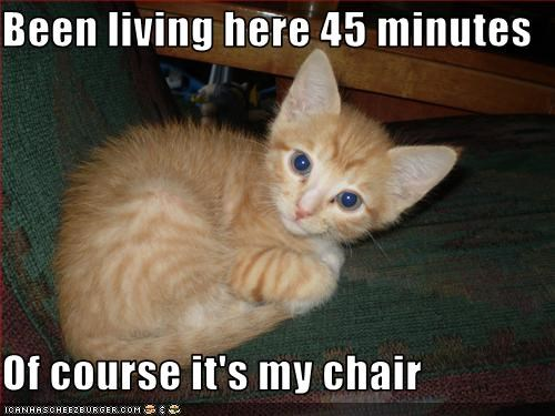 chair cute kitten nap - 3376022016