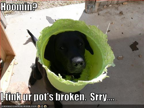 apologies broken head human i think pot sorry stuck - 3376321024