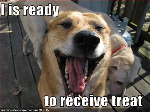 dogs im-ready mouth tongue treat what breed