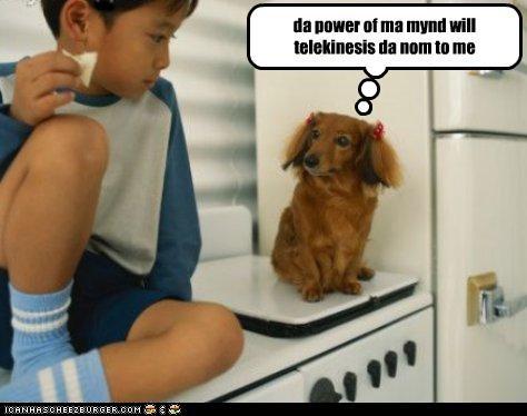 dachshund,human,nom,stare,telekinesis