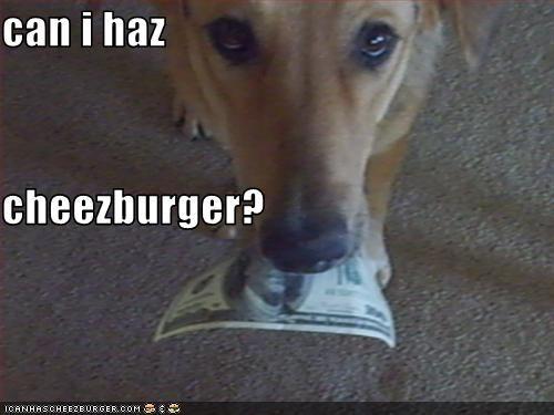 Cheezburger Image 3377499392