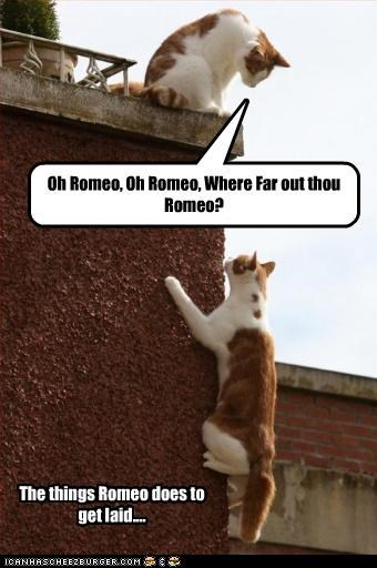 The things Romeo does to get laid.... Oh Romeo, Oh Romeo, Where Far out thou Romeo?