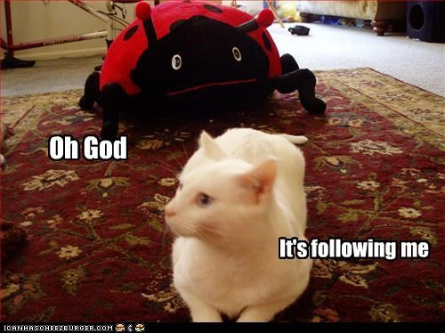 do not want ladybug scared stuffed animals - 3377802496