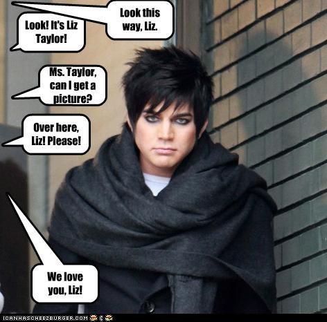 singers adam lambert American Idol bad hair elizabeth taylor gay grumpy lookalike - 3378187008