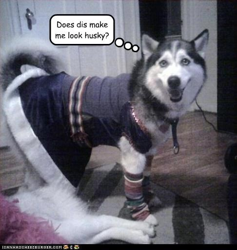 clothes costume Hall of Fame husky pun weight - 3378393344