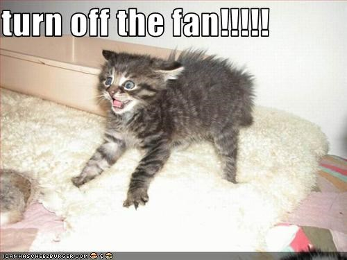cute,do not want,fan,kitten,wind