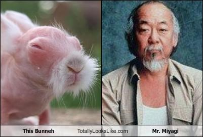 actor animal bunny Karate Kid Movie mr miyagi pat morita rabbit - 3378712576