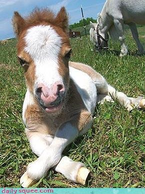 cute horse so tiny - 3380129536