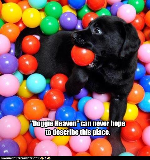 """""""Doggie Heaven"""" can never hope to describe this place."""
