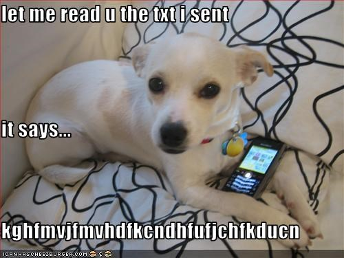 cell phone,chihuaha,text message