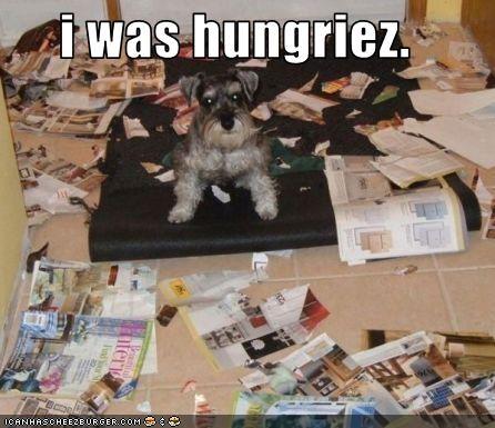 Cheezburger Image 3382623488