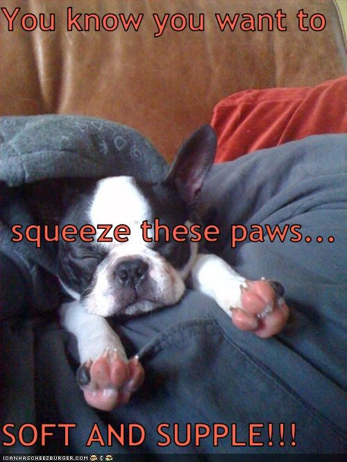Cheezburger Image 3382931968