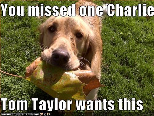 Cheezburger Image 3383294720