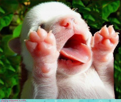 cute face puppy - 3383559680