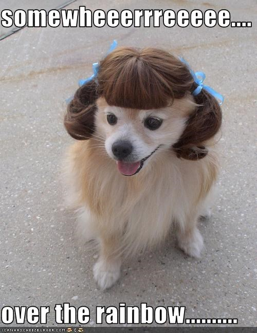 Dorothy,pomeranian,singing,somewhere over the rainbow,song,the wizard of oz,wig