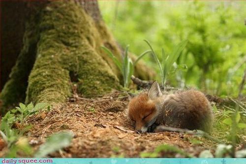 cute fox nerd jokes - 3383873792