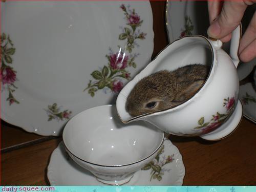 adorable bunny cute - 3383881472