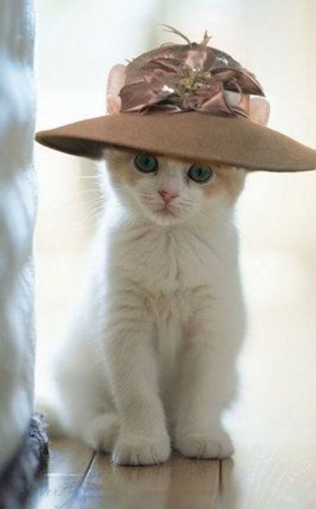 a funny list of cats wearing hats
