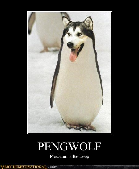 arctic penguin radiation reality Terrifying wolf - 3384558592