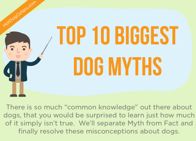 10 dog myths in infographics