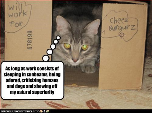 box cheezburger lazy work - 3385070080