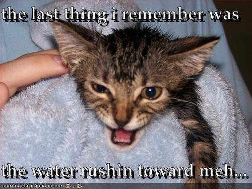 bath do not want kitten wet - 3385095424