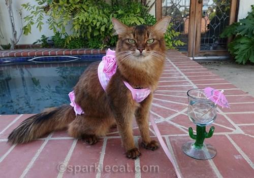 pets living luxury life