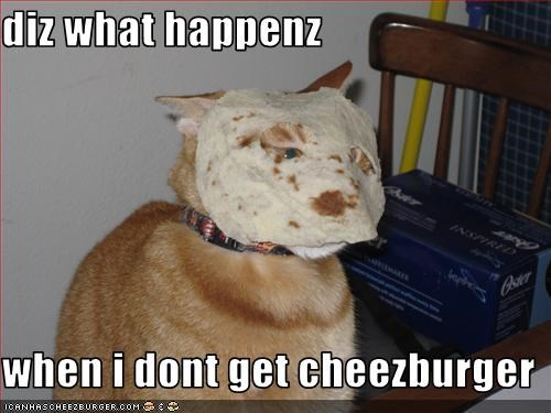 Cheezburger Image 3385811968