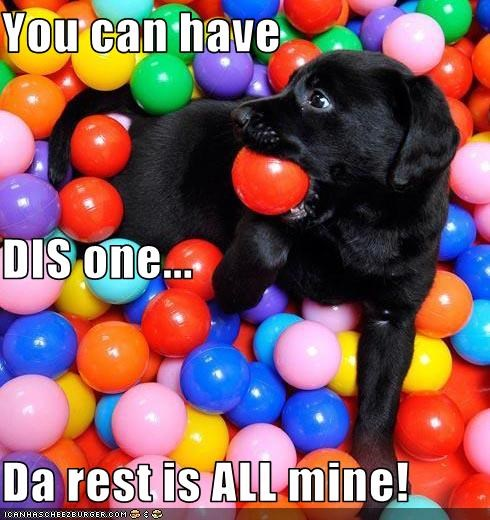 ball pit,puppy,sharing