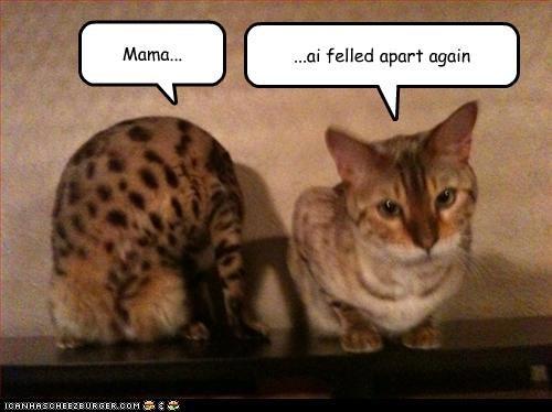halp,momcat