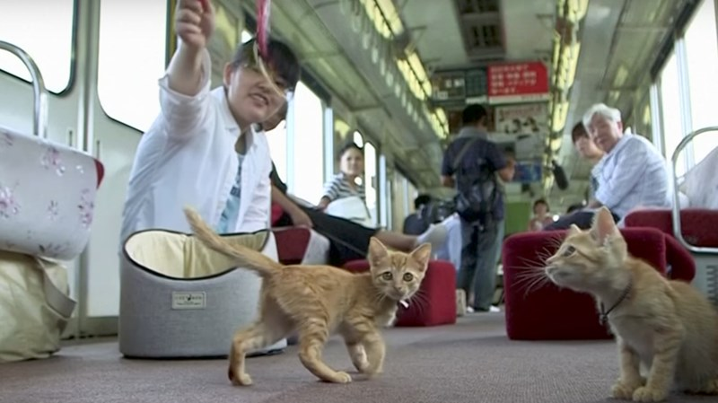a funny story about a cat cafe on a train