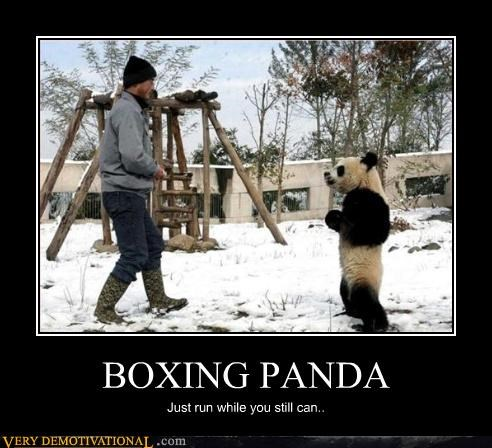 animals hilarious panda panda bear run sports Terrifying terrifyng - 3387013376