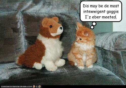 cute dogs kitten stuffed animals - 3388491008