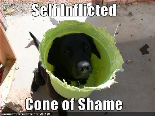 cone,FAIL,labrador