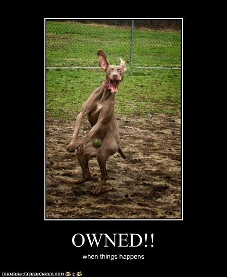OWNED!! when things happens