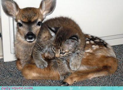 deer,kitty,naps