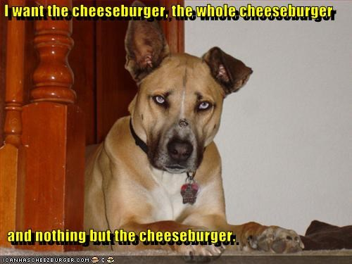 Cheezburger Image 3390029568