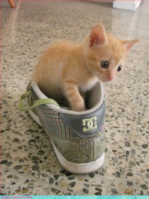 cute kitten nerd jokes - 3390255872
