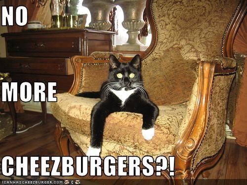 Cheezburger Image 3390605312