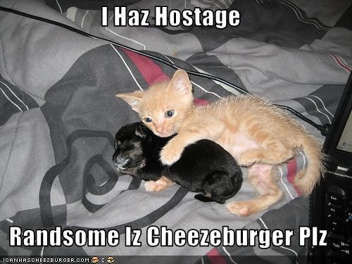 Cheezburger Image 3390639616