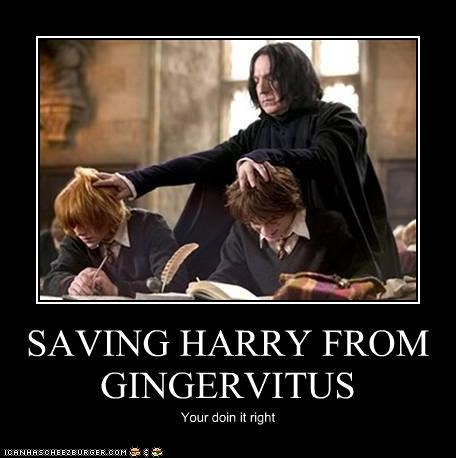 SAVING HARRY FROM GINGERVITUS Your doin it right
