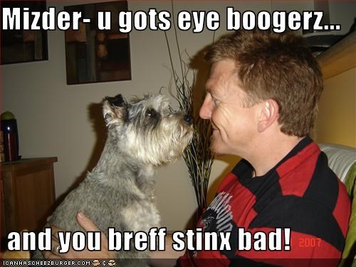 Cheezburger Image 3391619072