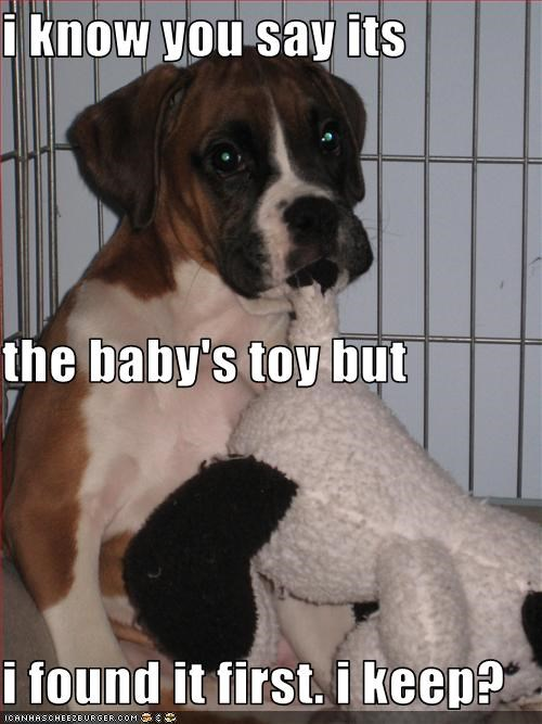 baby boxer finders keepers found it ownership protesting puppy stuffed animal toy what you said