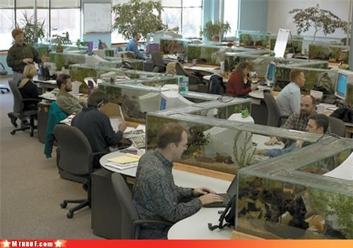 aquarium aquariums art awesome baller clever creativity in the workplace decor decoration expensive fish frivolous ingenuity insane late 90s dot-com startup tee hee lavish noisy bubble pumps duh office pets osha probably-photoshop-but-you-dont-care sculpture stupid swanky wasteful work smarter not harder - 3392574720