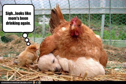 chicken golden retriever puppy - 3392625664